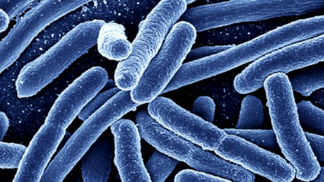 Bacterias para generar energía con placas solares